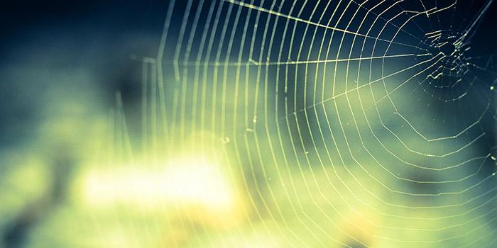 spider_net